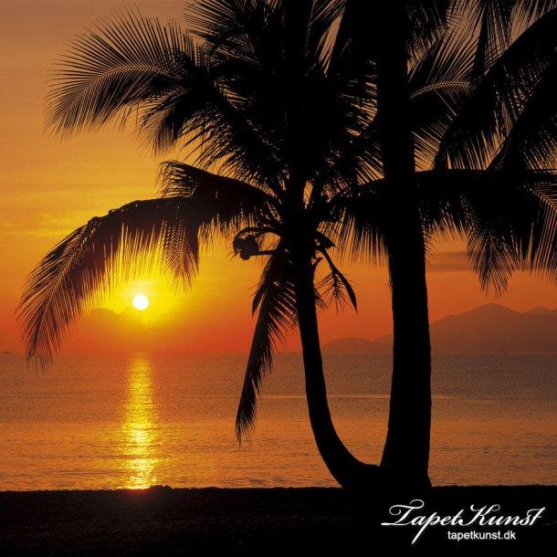 Palmy Beach Sunrise - 4 dele