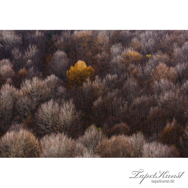 Autumn Forest Unika
