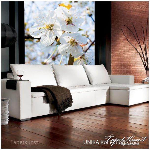 Frugttræ hvide blomster